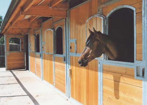 Passione ed esperienza per l'equitazione